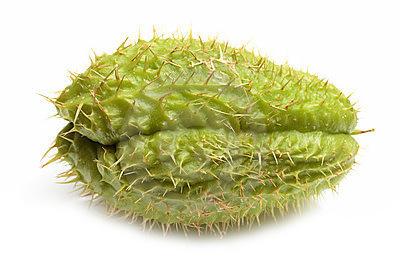 Chayote heeft eetbare bloemen, bladeren, vruchten, groeischeuten en wortelknollen.