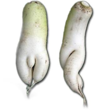 afrodisiac - signatuurleer